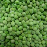 New crop extra fine fresh IQF frozen green peas