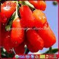 Good for health goji berry seeds benefits of goji berries buy goji berries