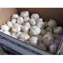 Garlic price/Fresh garlic/Wholesale garlic
