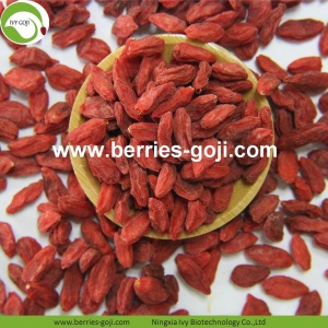 Fuente de la fábrica Healthy Dry Fruit Super Food Goji