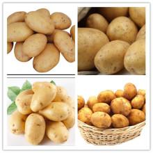 Высококачественный Голландский 15 свежих картофеля