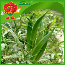 Cheap Okra supplier Best Green Okra
