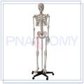 2017 mais popular 3d modelo de esqueleto online grátis personalizado