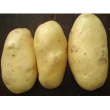 Bonne qualité de pommes de terre fraîches pour les ventes