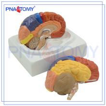 Modèle de cerveau éducatif en plastique PNT-0612 avec 3 parties