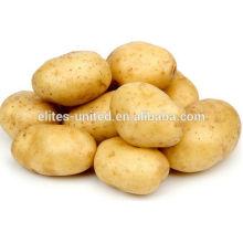 Pommes de terre fraîches en provenance de Chine