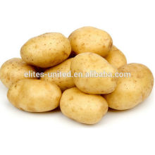 Batata fresca da China