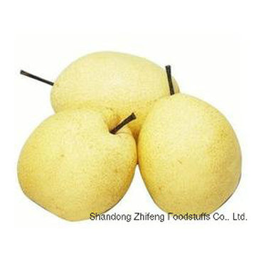 Fresh Ya Pear with High Exporting Quality in 2016