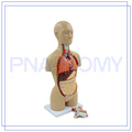 PNT-0322 Équipement médical torse féminin à usage médical