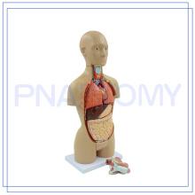 PNT-0322 Equipo médico torso femenino para uso médico