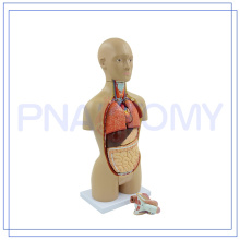 PNT-0322 Plastic Human Torso Anatomy with Removable Organs