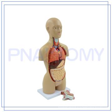 PNT-0322 Venta caliente 16 partes modelo de torso humano
