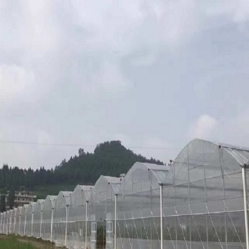Large Multi-Span Plastic Film Vegetables Greenhouse