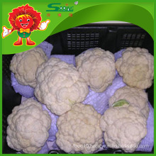 FROZEN CAULIFLOWER ORGANIC FOOD