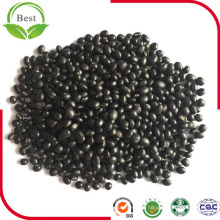 New Crop Chinese Black Beans Black Matpe Beans