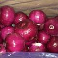 2019 new fresh onion