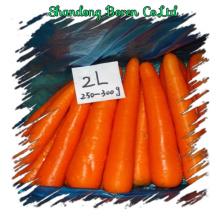 2015 Лучшее качество Свежий морковь в любом размере
