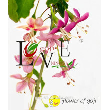 Heißer Verkauf Bio Goji Beeren mit hoher Qualität