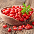 Atacado Secas Wild Goji Berry Ningxia bulk