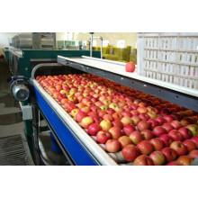 Linha de produção de frutas / maçã / pêra / manga / suco de laranja