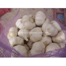 Чистый белый чеснок из Цзиньсяна