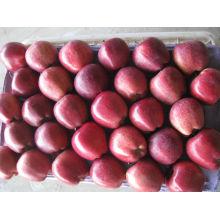 Новый урожай яблока свежих фруктов хуниу