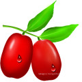 Zizyphus jujube extract // jujube seed