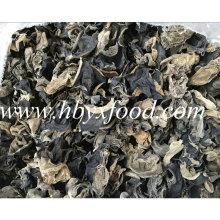 0,7-1,5 centímetros secos orelha de madeira orgânica branco back fungo