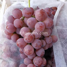 Red flower grape new crop purple skin