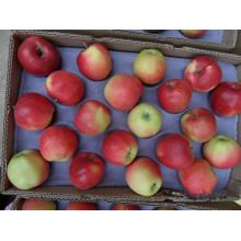 Экспорт свежего гала-яблока из Китая