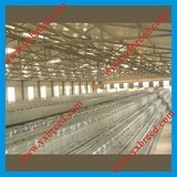 Poultry Layer House A3l90