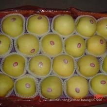 2015 New Crop Exporting Standerd Golden Apple