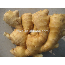 ginger market price ginger price for sale