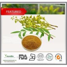 Alta Qualidade 100% Natural Certificado Orgânica Senna Leaf Extrato Em Pó