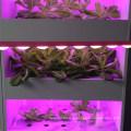 способствовать росту высокого Ra97 Сид cri гидропоники растут свет панели