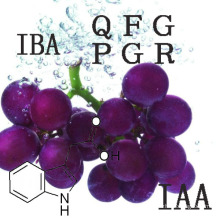 Plant Growth Regulators Growth Promotors 3-Indolebutyric Acid (IBA)