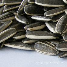 2017 crop black sunflower seeds for sale