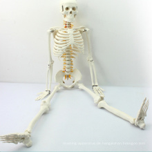 SKELETON05 (12365) Medizinisches mittleres Skelett-Anatomie-Modell mit spinalem Nerv, Skeleton Modell 85cm, bestes Geschenk für Doktor