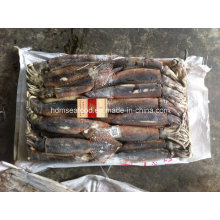 Wholesale Frozen Seafood 200-300g Illex Squid