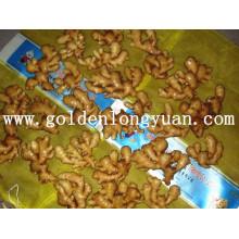 Gengibre fresco embalado com saco de malha 20 kg