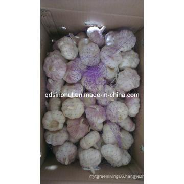 5.0cm Purple Garlic (10kg Carton)
