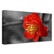 La galería envolvió los diseños rojos de la pintura de la flor