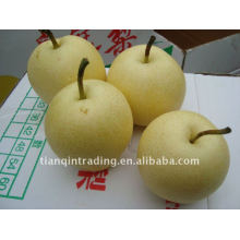 chinese crown pear