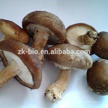Extrait de mycélium aux champignons Shiitake de haute qualité