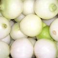 Ausgezeichnete geschälte Zwiebel für den Export