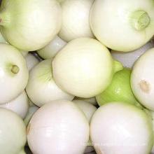 Nueva cebolla pelada fresca del cultivo (todo el tamaño)