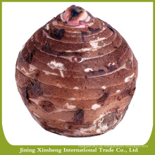 Shandong taro fresco