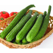 Factory Provide Top Quality Natural Herbal Cucumber P. E. Extract Powder