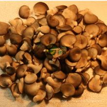 Gefrorener Baby Oster Pilz 1-3cm