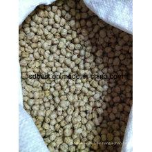 8mm Kabuli Chickpeas Desde China